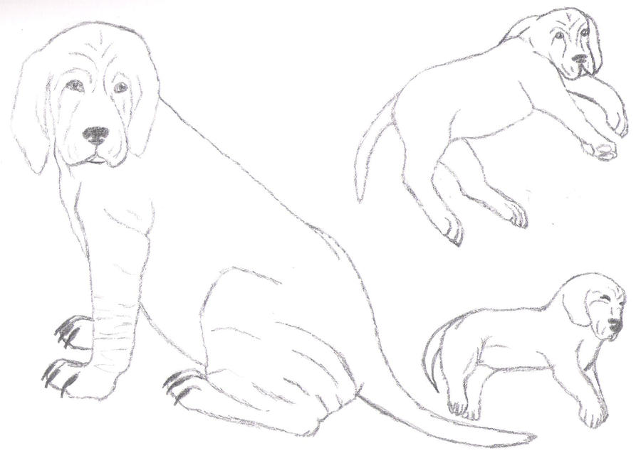 Bloodhound Coloring Pages Wallpaper Dog Breeds Picture Bloodhound Coloring Pages