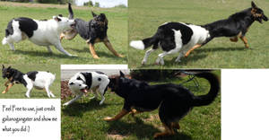 Dog Fight Stock Pack 3