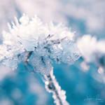 Ice Petals by Korpinkynsi