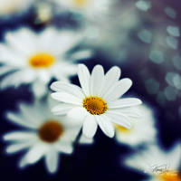Farewell Melody by Korpinkynsi