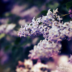 Aromatherapy by Korpinkynsi