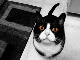 Tux: The talkative cat by ArtNoobly