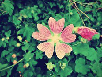 Somber flowers. by ArtNoobly
