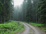 Rainy Forest #3