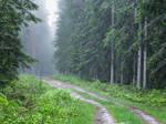 Rainy Forest #6