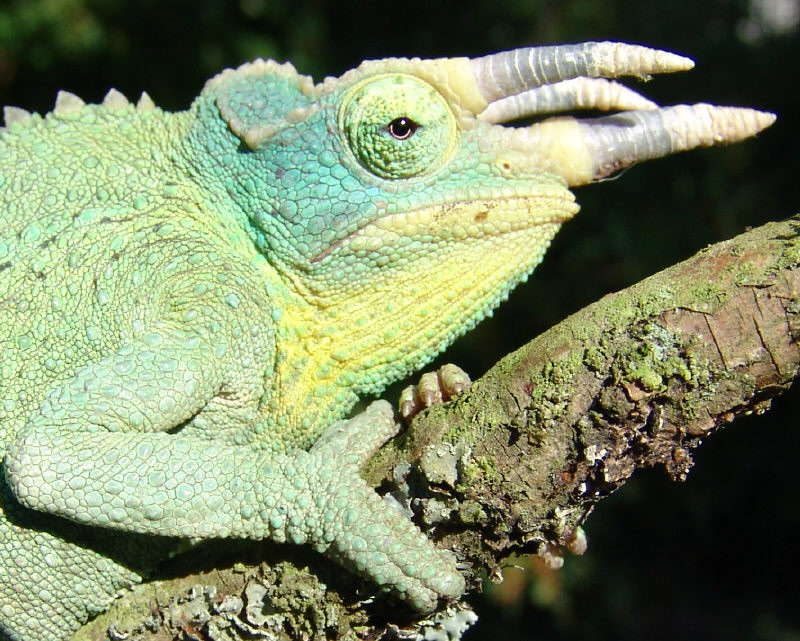 Mr T. true colours by Gorgosaurus