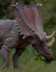 Chasmosaurus belli by Gorgosaurus