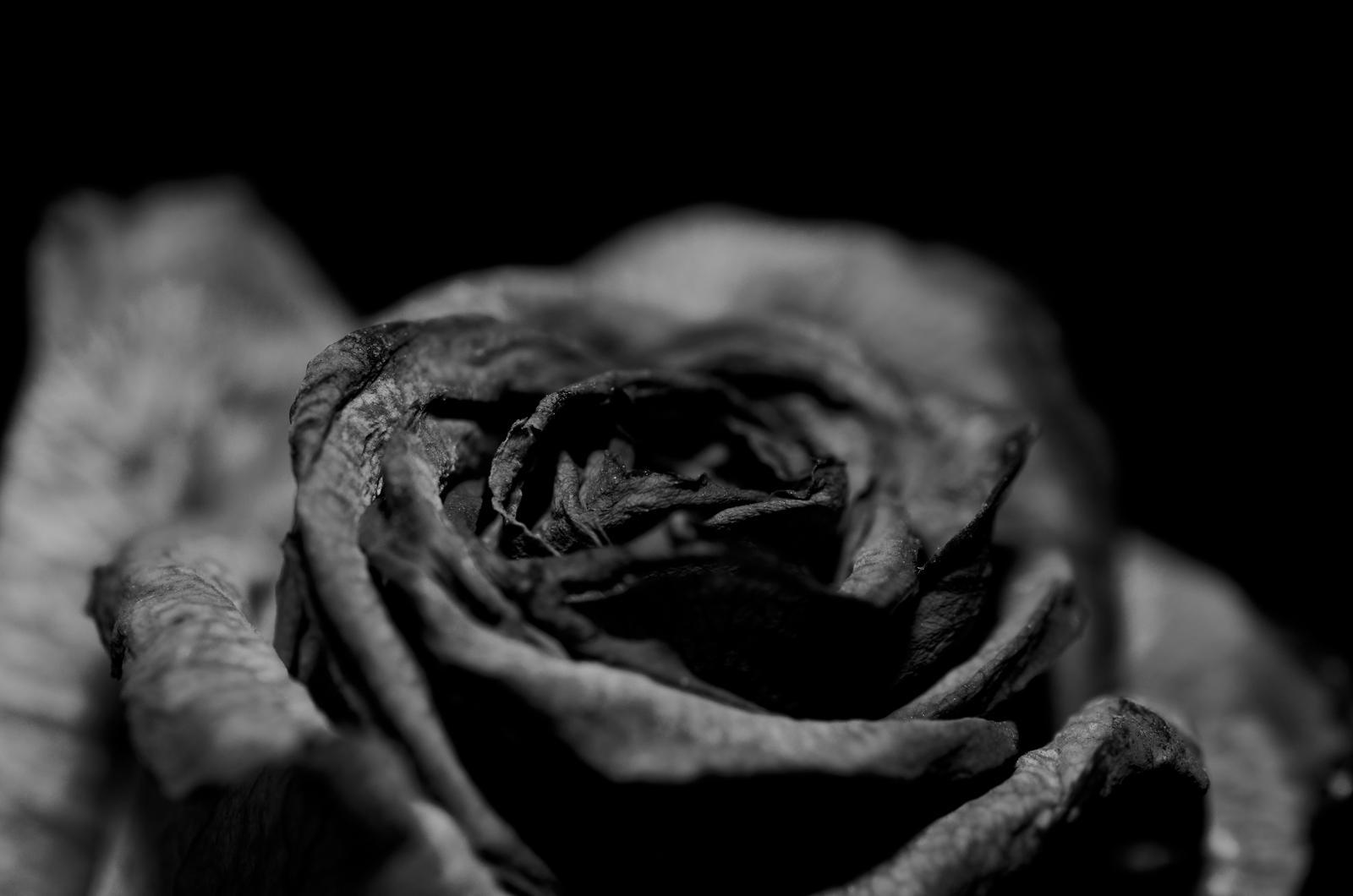 Black And White Rose Tumblr
