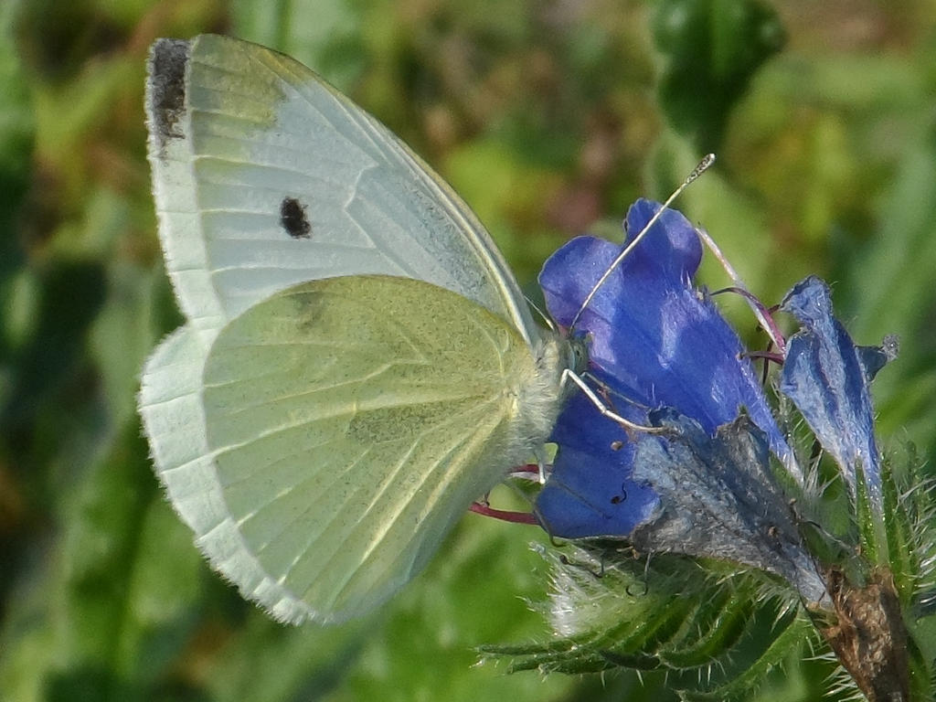 Drinking from the blue flower by Stilleschrei