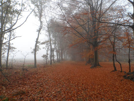 The foggy autumn path