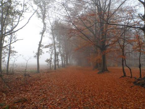 The foggy autumn path