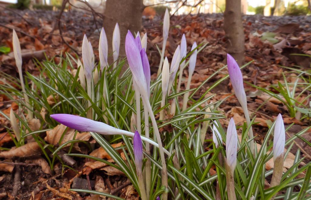 Ye winter haters: I found spring! by Stilleschrei