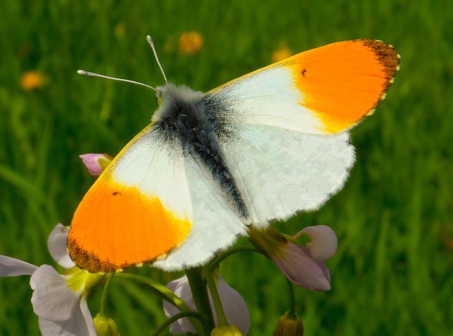 Orange seeks black and white by Stilleschrei