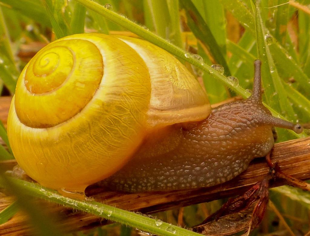 A snail's watery wonderworld by Stilleschrei