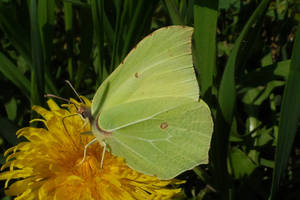 The satisfaction of a butterfly, a poem by Stilleschrei