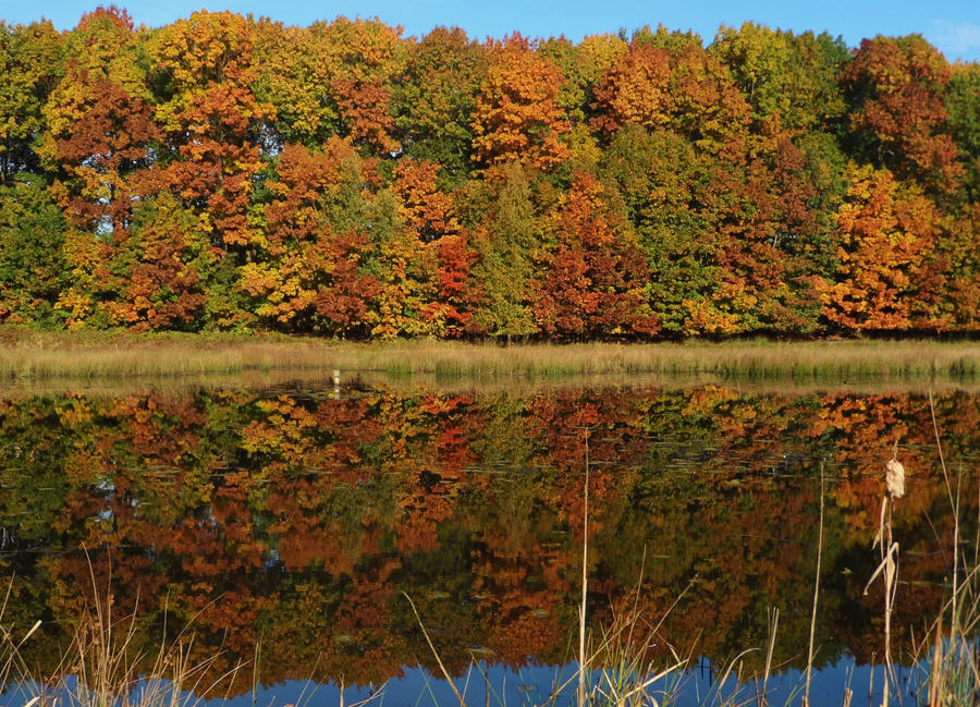 Autumn reflection by Stilleschrei
