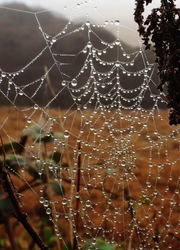 Foggy spiderweb by Stilleschrei