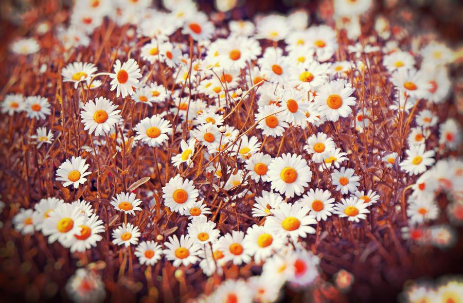 flower by EvaMir