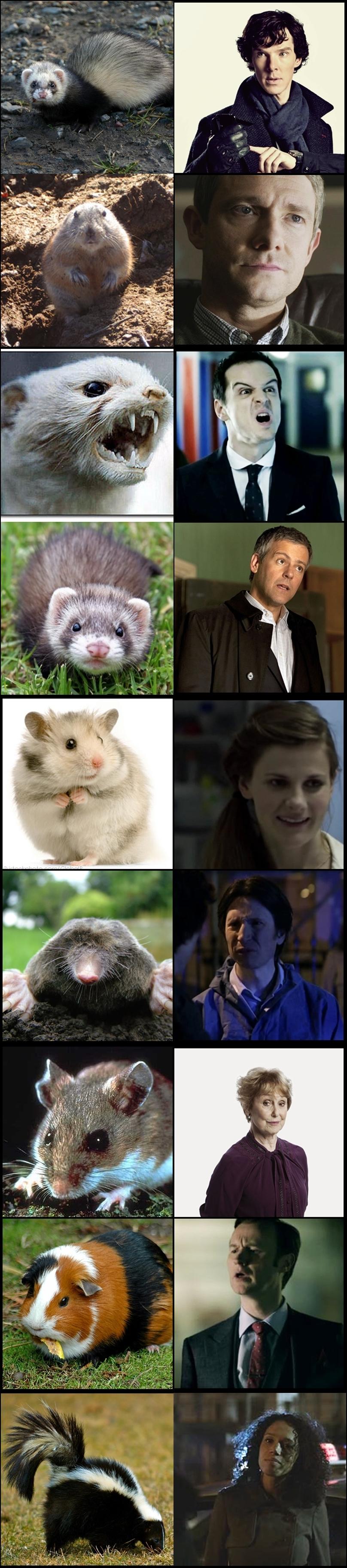 BBC Sherlock Wildlife by OrminLange