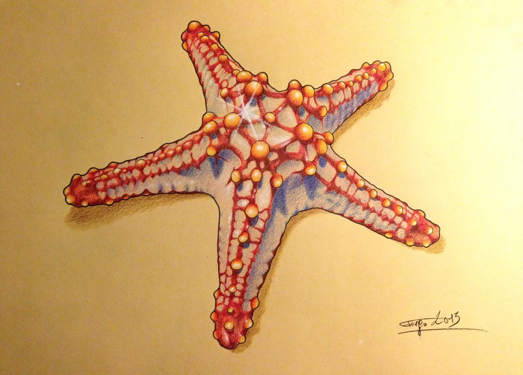 pastel starfish by Zetas-Art