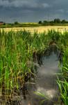 Polish landscape 2