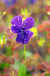 Flower from Tvedestrand