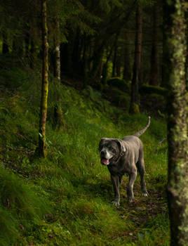 Gimli the dog
