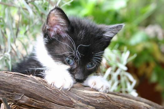 The strange eyes of the Kitten