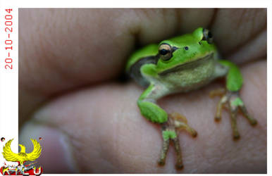 Frog in
