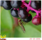 Bug on the berries