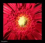 Colour Stimulus by Sgnappy