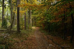 October Walk 2 by GlaedrTheDragon