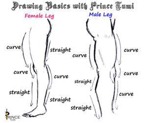 Leg Sketch guide by PrinceTumi