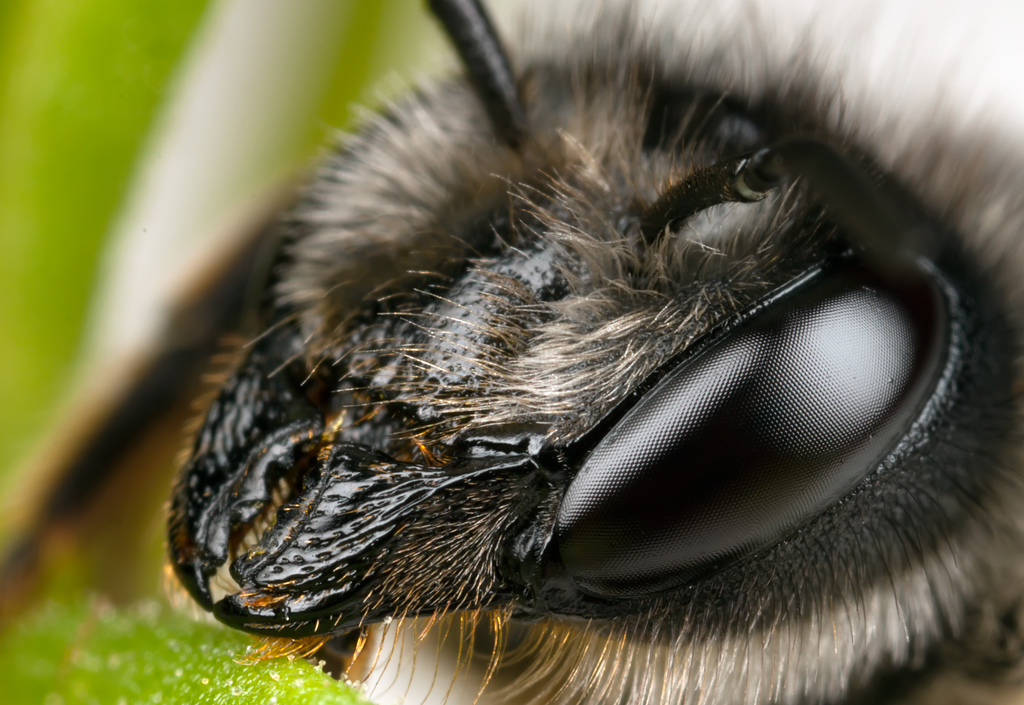 Bee by Kuvailija
