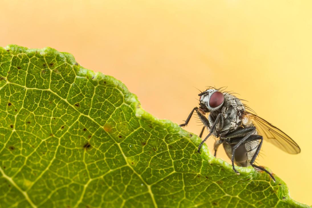 Tiny fly by Kuvailija