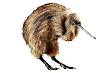 KIWI bird by ru-ka