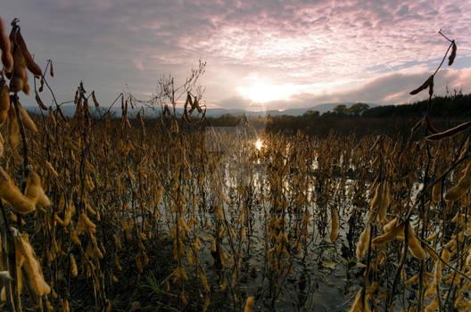 Water on cropfields