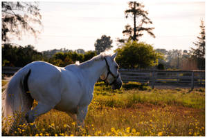 In The Dying Sun by Equus-Photography