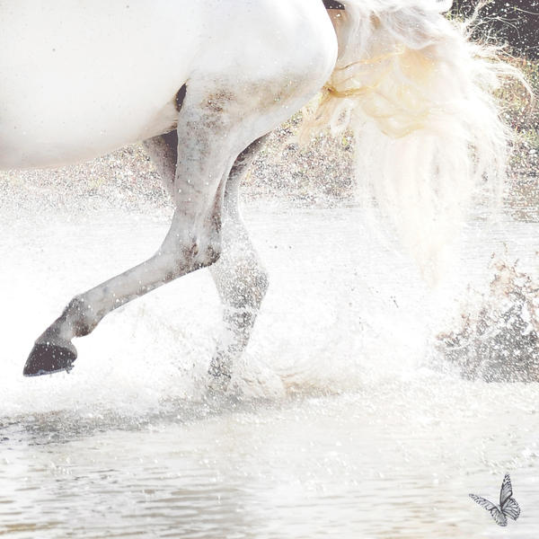 Run Wild by Equus-Photography