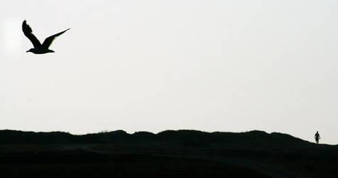 ptak i czlowiek by Misia3