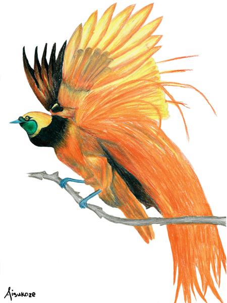 Bird of paradise animal drawing - photo#19