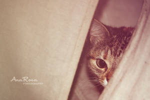 Hidden by AnaRosaPhotography