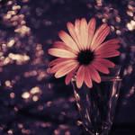So long by AnaRosaPhotography