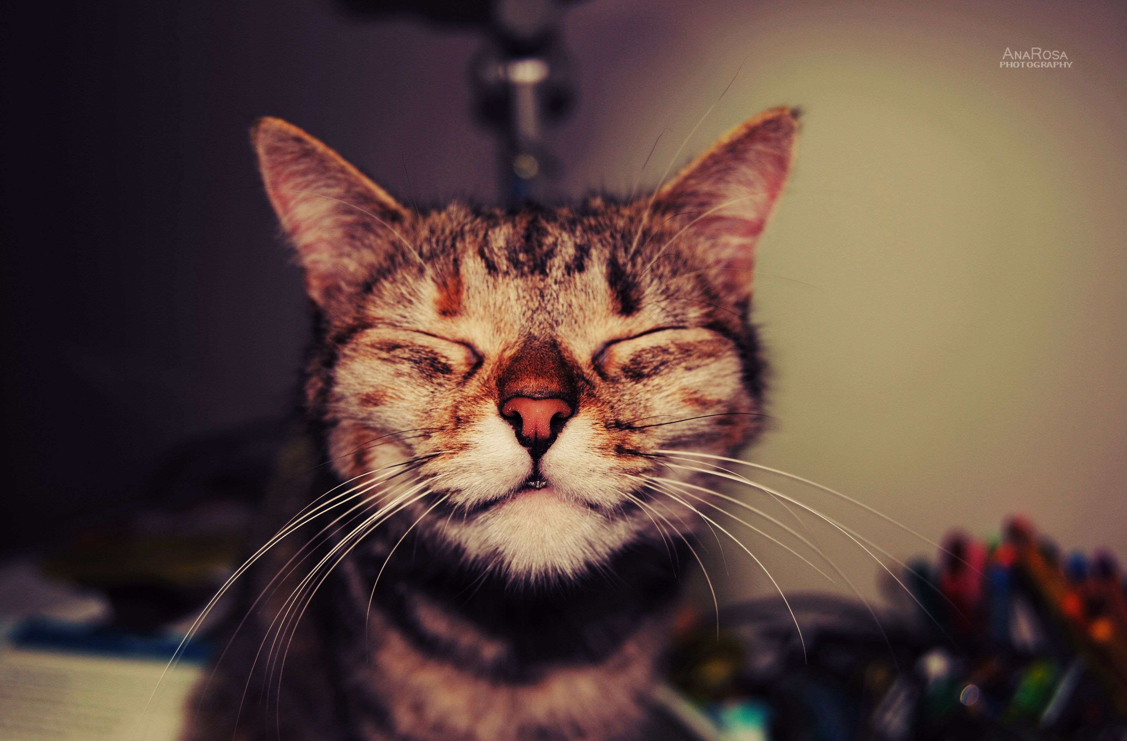 Smiling Kitties on Pinterest | Smiling Cat, Cats Humor and ...