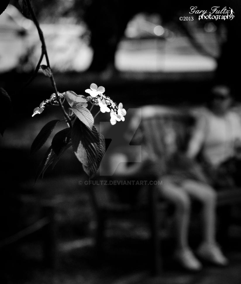White Flower by GFultz