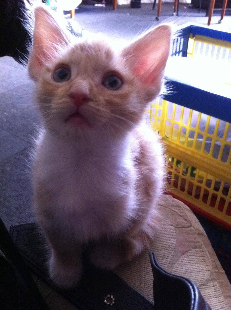 kitten 6 by mikkha76