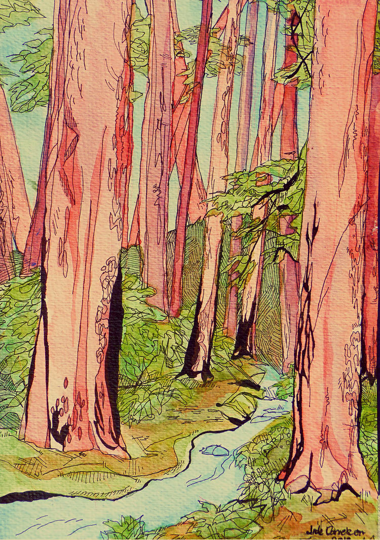 redwoods by dogtoothpaste