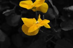 Cantigny Flower by martyf81