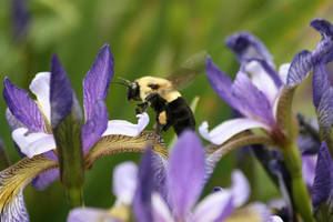 Bee by martyf81