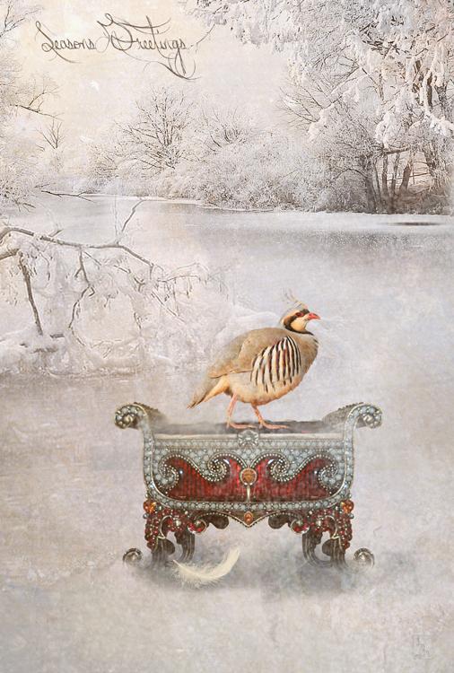 seasons greetings by JenaDellaGrottaglia
